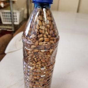 Roasted Ukwa (African Breadfruit) - royacshop.com